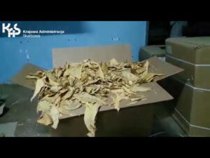 KAS zlikwidowała nielegalną krajalnię i zabezpieczyła 2,2 t tytoniu (audiodeskrypcja)