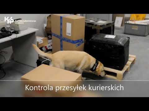 Luna kontroluje przesyłki kurierskie (audiodeskrypcja)