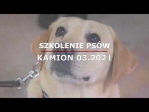 Szkolenie psów służbowych warmińsko-mazurskiej KAS (audiodeskrypcja)