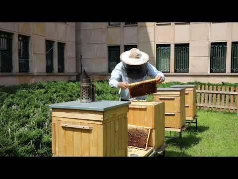 Trwa drugi sezon w naszej pasiece! #PszczołyMF