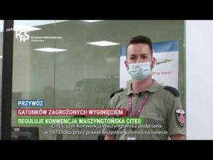 Read more about the article #PoznajKAS Zakazane pamiątki CITES
